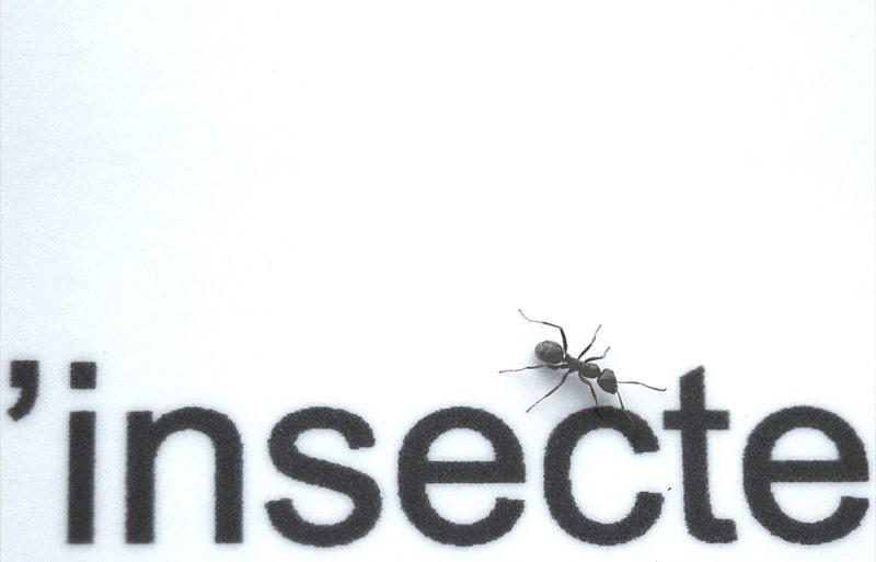 macro insecte fourmie