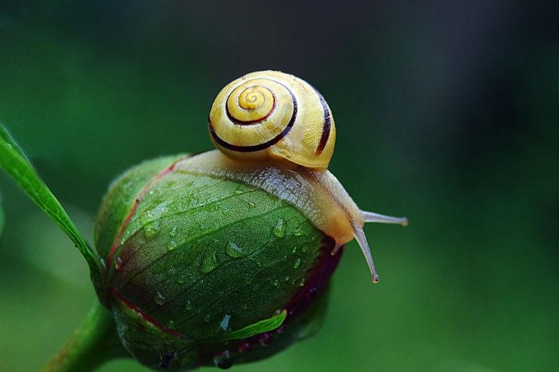 macro escargot