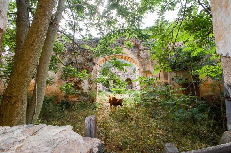Vache et ruine, Corse